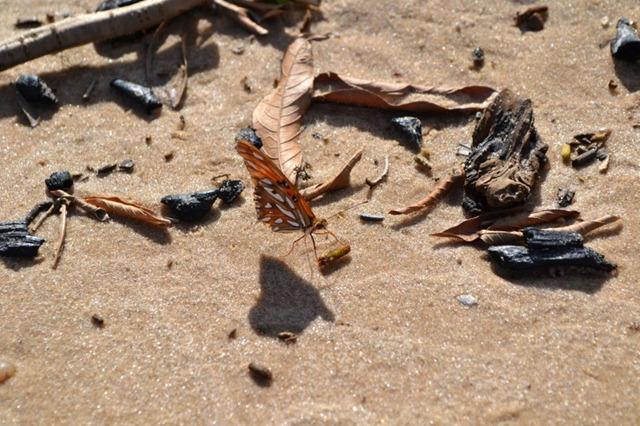 Mariposa en la arena