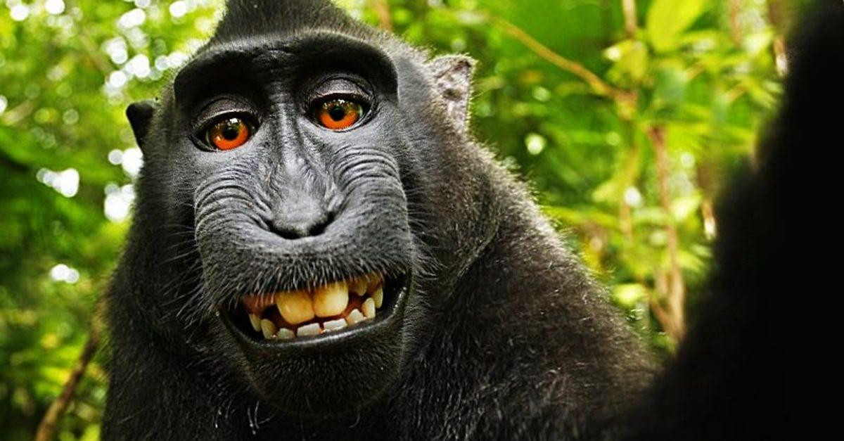 selfie-de-un-mono