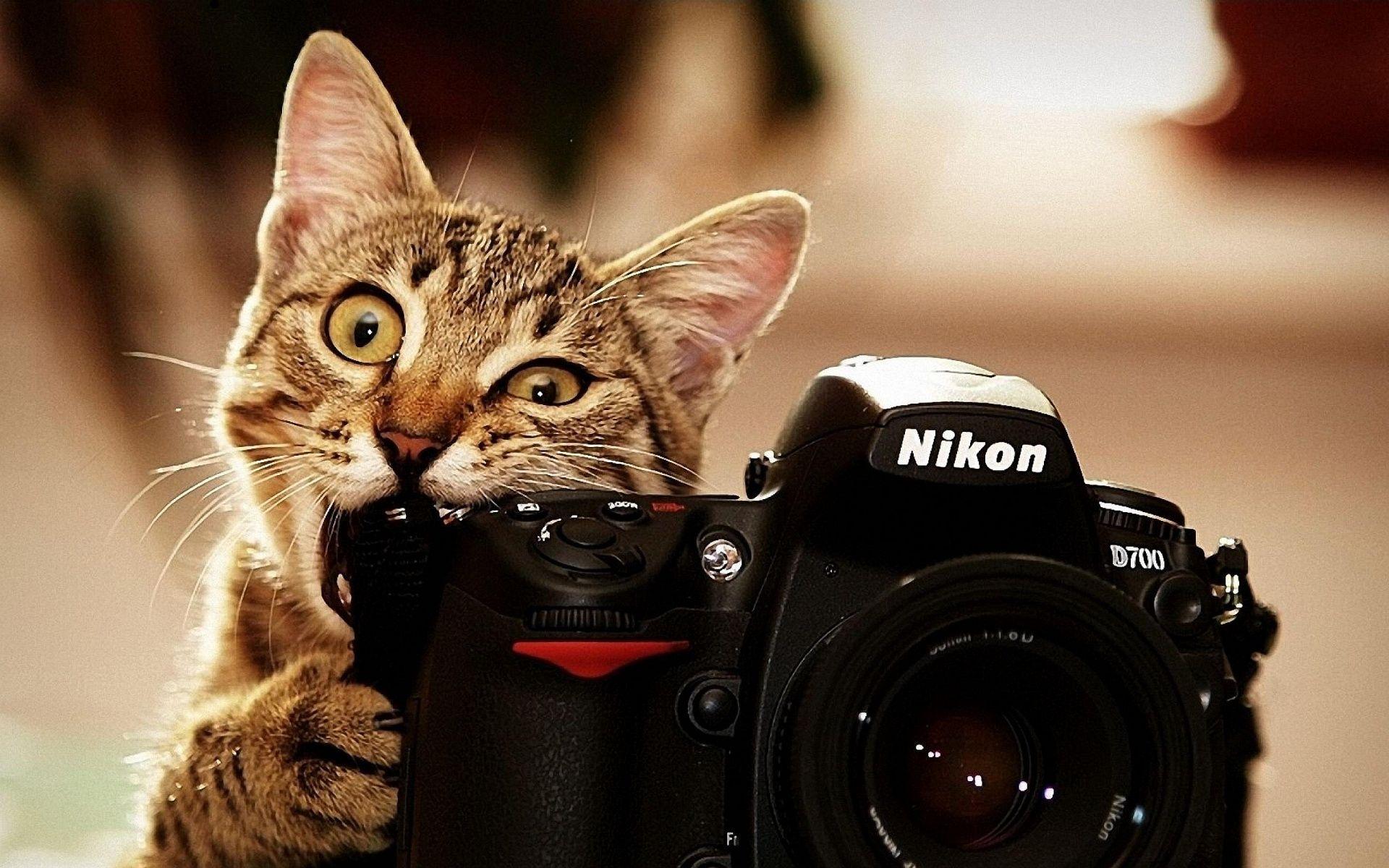 Si bien esta foto se zarpa en ternura, la verdad es que no, un gato ni tampoco muchos humanos pueden manejar una DSLR