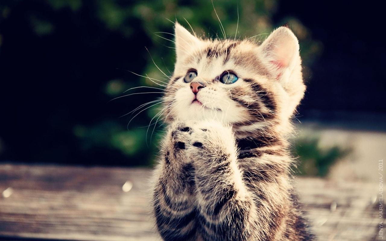 Internet pr0tip: Cuando te quedes sin imágenes coherentes, poné un gatito