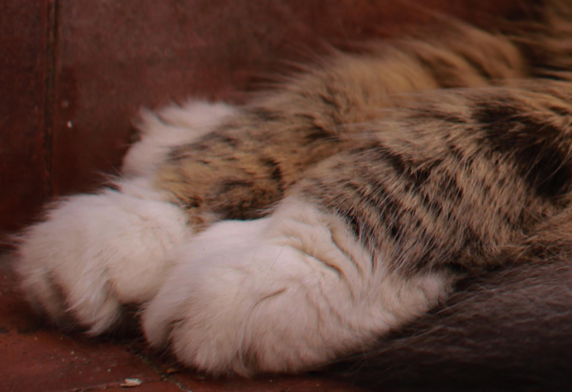 Las patas de mi gato en ISO 100 (detalle)